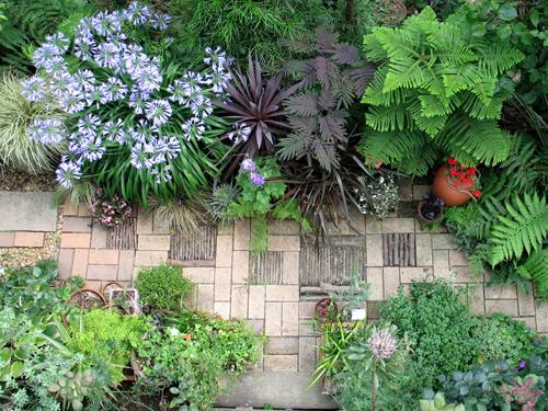 Suicidio instant neo entre y mu rase de la envidia - Plantas tropicales para jardin ...
