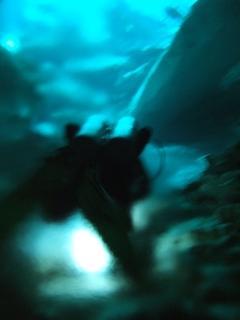 cenote8