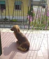 al balcone
