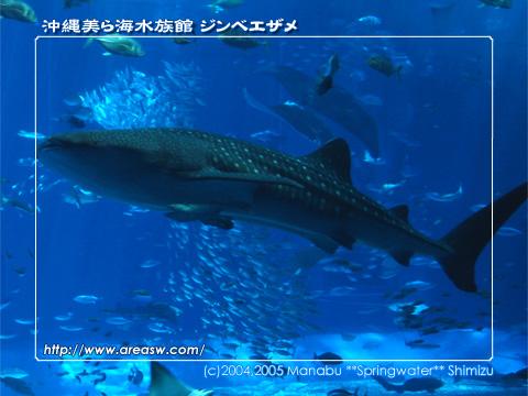 沖縄美ら海水族館 ジンベエザメ