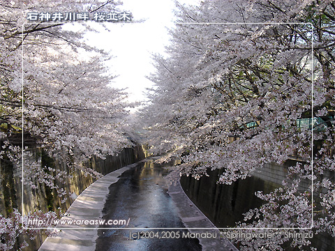 石神井川畔 桜並木