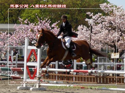 馬事公苑 八重桜と馬術競技
