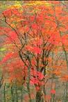紅葉が真っ盛り