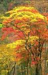 紅葉が始まる