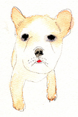 地島ブス犬