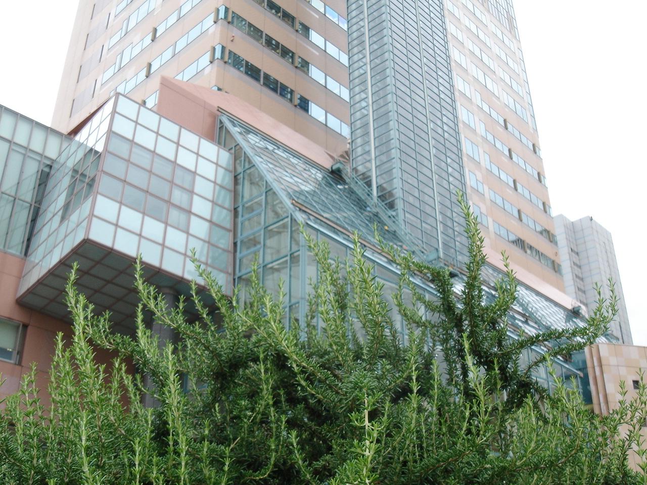 20060719神戸3ローズマリーとビル15