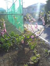 もうすぐ春