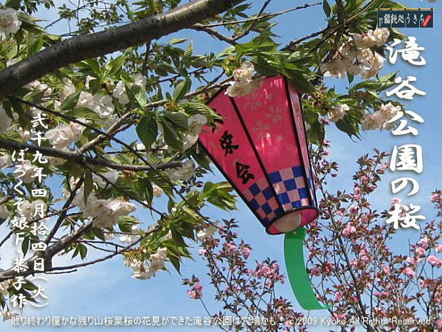4/14(火)【滝谷公園の桜】散り終わり僅かな残り山桜葉桜の花見ができた滝谷公園は穴場かも!@キャツピ&めん吉の【ぼろくそパパの独り言】    ▼クリックで1280x960pxlsに拡大します。