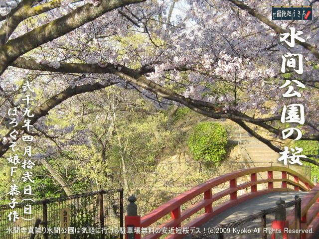 4/12(日)【水間公園の桜】水間寺真隣り水間公園は気軽に行ける駐車場無料の安近短桜デス!@キャツピ&めん吉の【ぼろくそパパの独り言】    ▼クリックで1280x960pxlsに拡大します。