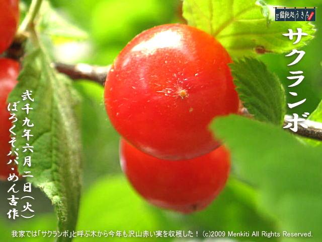 6/2(火)【サクランボ】我家では「サクランボ」と呼ぶ木から今年も沢山赤い実を収穫した! @キャツピ&めん吉の【ぼろくそパパの独り言】▼マウスオーバー(カーソルを画像の上に置く)で別の画像に替わります。    ▼クリックで1280x960画像に拡大します。