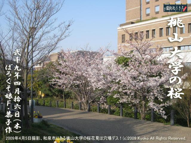 4/16(木)【桃山大学の桜】2009年4月5日撮影、和泉市にある桃山大学の桜花見は穴場デス!@キャツピ&めん吉の【ぼろくそパパの独り言】    ▼クリックで1280x960pxlsに拡大します。
