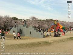 和泉市黒鳥山公園の桜(7)和泉市黒鳥山公園花見画像