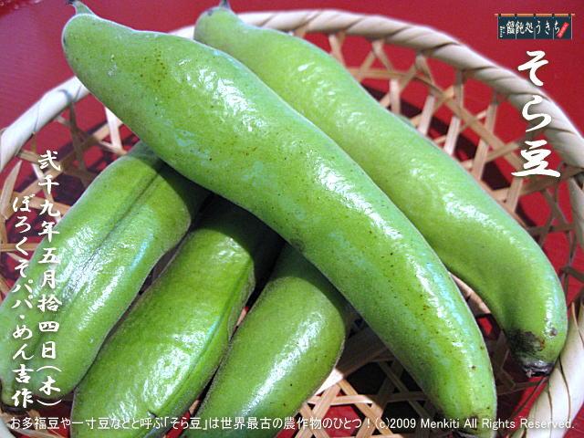 5/14(木)【そら豆】お多福豆や一寸豆などと呼ぶ「そら豆」は世界最古の農作物のひとつ! @キャツピ&めん吉の【ぼろくそパパの独り言】▼マウスオーバー(カーソルを画像の上に置く)で別の画像に替わります。▼クリックで640x480画像に拡大します。
