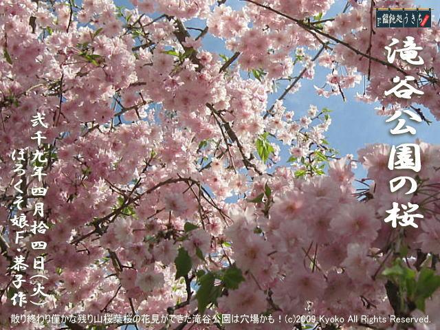 4/14(火)【滝谷公園の桜】散り終わり僅かな残り山桜葉桜の花見ができた滝谷公園は穴場かも!@キャツピ&めん吉の【ぼろくそパパの独り言】     ▼クリックで元の画像が拡大します。