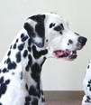 ルンルン君(タレント犬 ♂):西さん