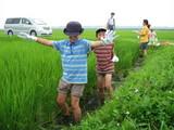 田んぼで草取り