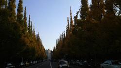 銀杏並木Ⅱ