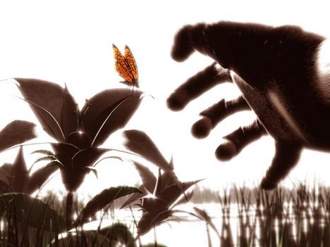 NathanPrestopnik_butterfly