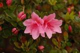 garden060326-3