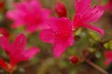 garden060326-0
