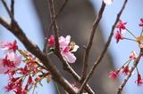 桃の花-2