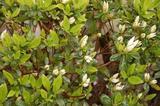 garden060326-2