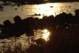 河原の夕日