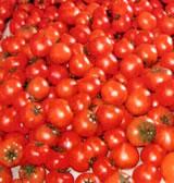 HB-101でトマトは色艶、甘味酸味のバランス良いです