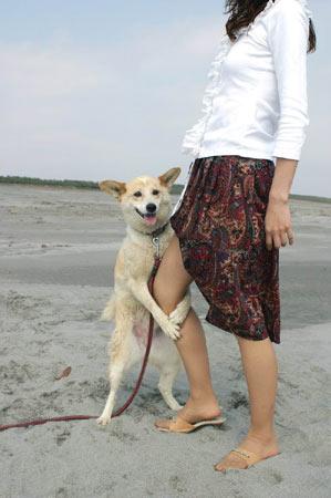 この脚の御婦人は妻ではありません