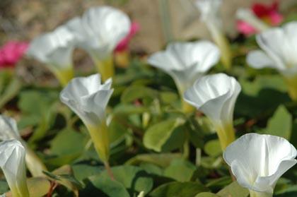 白くて綺麗な花1