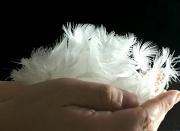 ふわふわの羽根