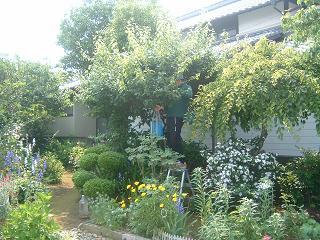 庭奥の梅の木