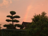 夕焼けに染まる虹