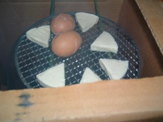 ゆで卵と6Pチーズをスモーク中