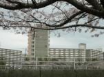 浦安・境川の桜2007その2