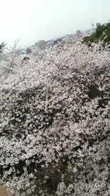 1ceae8c1.jpg