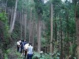 人工林の山