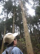 木を眺める