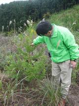 3年目植林