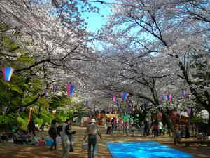 小牧山の桜
