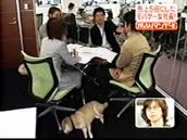 会議室で愛犬