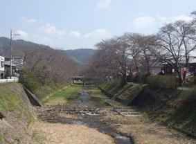 井出桜325B