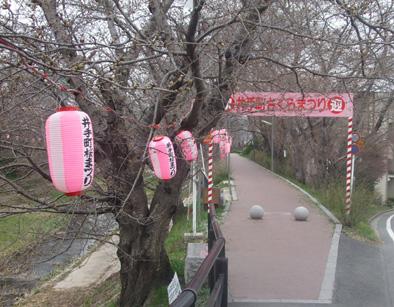 井出桜323C