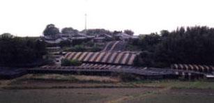 茶畑三山木