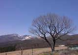 嬬恋牧場展望台