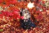 Autumn Leaves_3