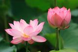 Lotus 2006_02