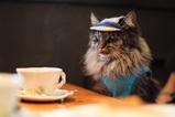 Tea Time_1