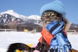 猫ぞり_1