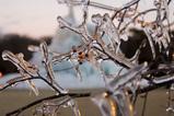 樹氷まつり01